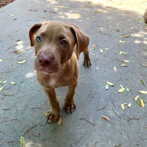 san diego puppy training