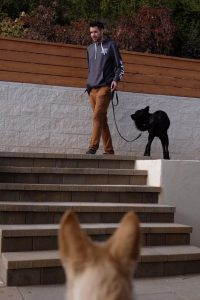 san diego dog trainer